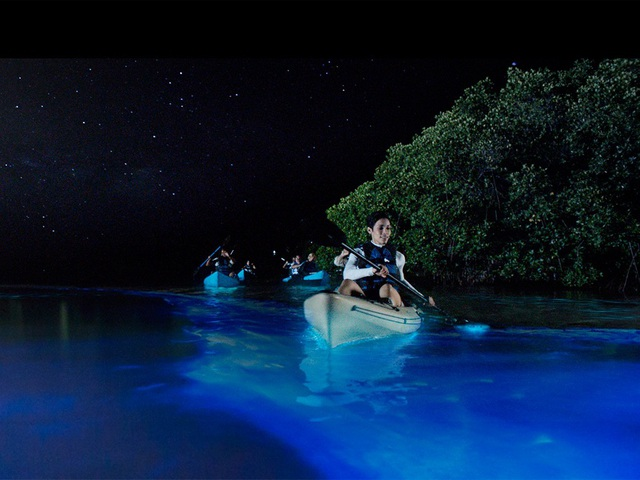 Đến Mỹ trải nghiệm chèo thuyền trong suốt giữa biển nước phát sáng! - 2