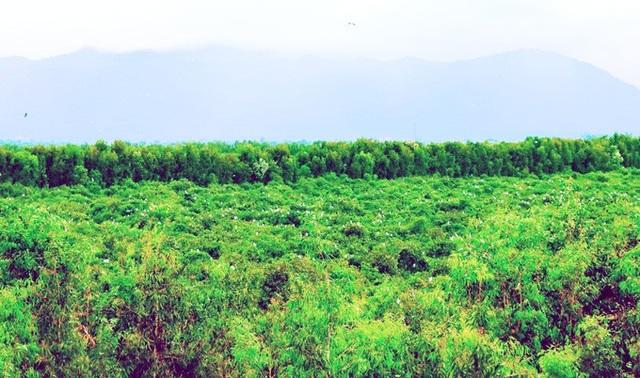 An Giang: Rừng tràm Trà Sư đẹp nhất mùa nước nổi - 4
