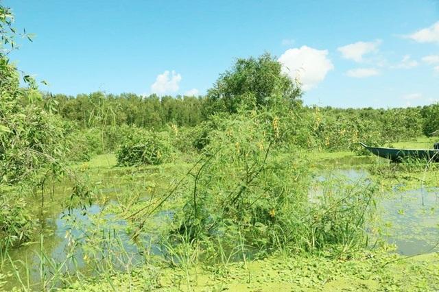 An Giang: Rừng tràm Trà Sư đẹp nhất mùa nước nổi - 8