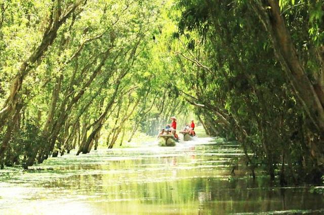 An Giang: Rừng tràm Trà Sư đẹp nhất mùa nước nổi - 10