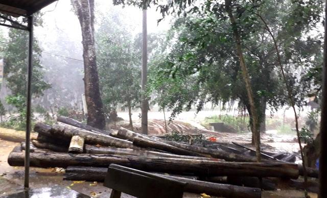 Tỉnh uỷ Bình Phước yêu cầu điều tra vụ phá rừng nghiêm trọng - 3