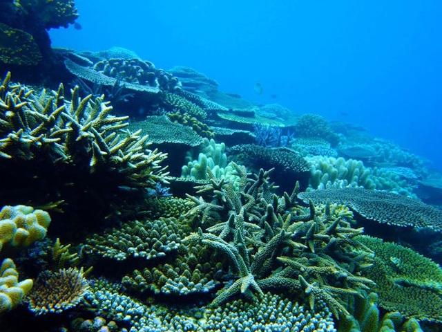 Các rặng san hô trên khắp thế giới đang có tỷ lệ tẩy trắng tăng cao.