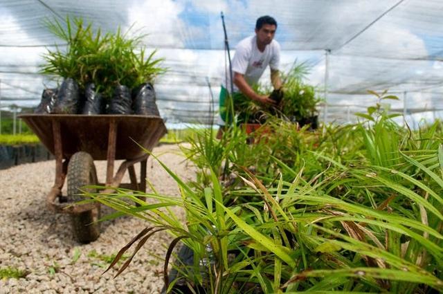 Phát triển nông nghiệp bền vững là câu hỏi lớn khi đầu tư vào công nghệ carbon thấp.
