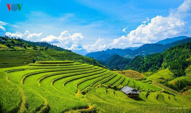 Ngắm đồi mâm xôi đẹp nổi tiếng trong mùa vàng Mù Cang Chải - 1