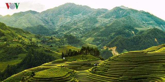 Ngắm đồi mâm xôi đẹp nổi tiếng trong mùa vàng Mù Cang Chải - 3