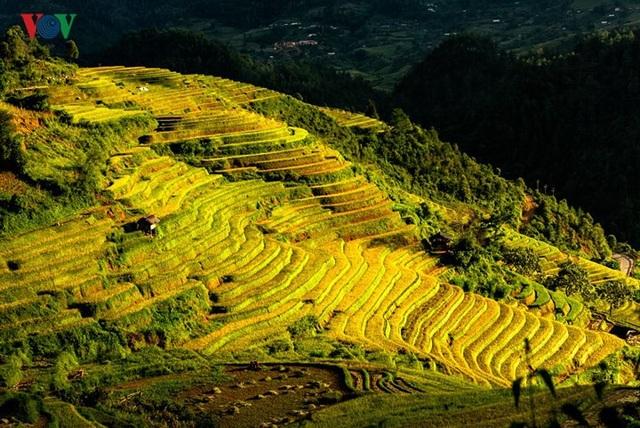 Ngắm đồi mâm xôi đẹp nổi tiếng trong mùa vàng Mù Cang Chải - 5