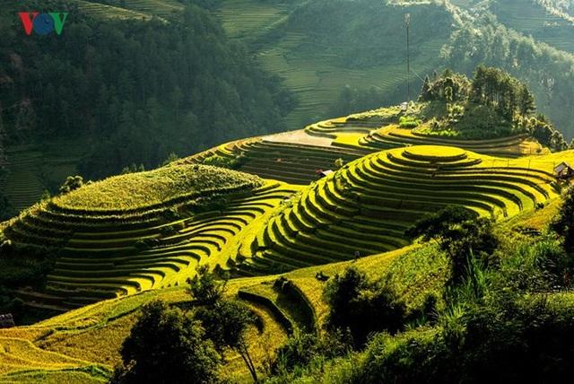 Ngắm đồi mâm xôi đẹp nổi tiếng trong mùa vàng Mù Cang Chải - 7