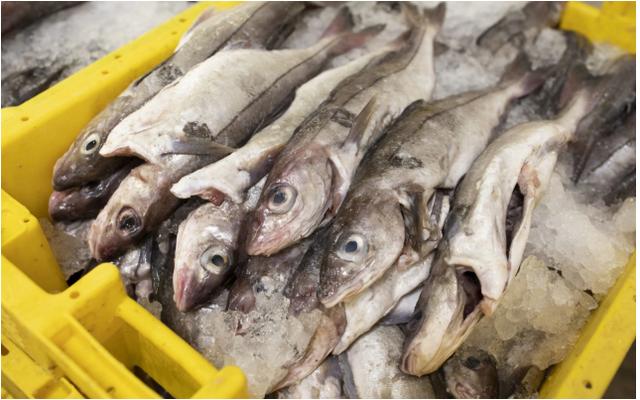 Mối nguy hiểm đến  từ việc cá bị câu rồi được thả ra - 1