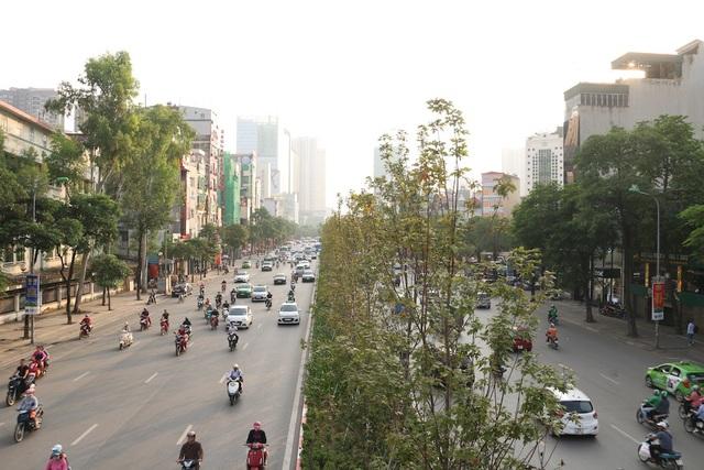 Hàng phong lá đỏ này vẫn đang trong giai đoạn trồng thử nghiệm trên đường phố, nếu phù hợp sẽ được nhân rộng ở nhiều địa điểm khác.