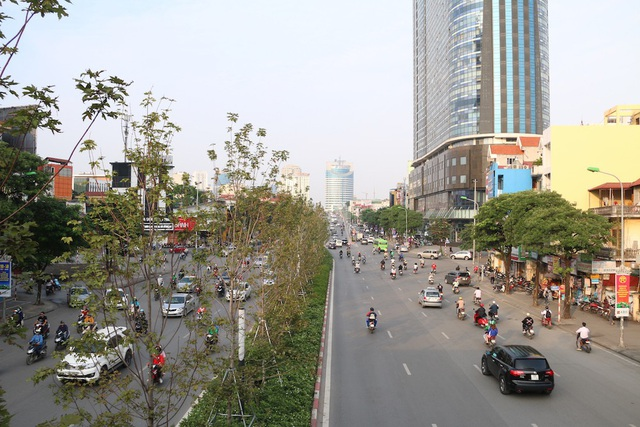 Mới đây, TP Hà Nội đã cho trồng 100 gốc cây phong lá đỏ tại tuyến phố Trần Duy Hưng - Nguyễn Chí Thanh. Loài cây ôn đới với màu lá vàng lãng mạn vào thu được kì vọng sẽ đem lại làn gió mới mẻ cho phong cảnh Thủ đô.