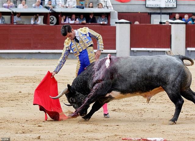 Rubén Pinar trong cuộc đấu vừa khiến anh bị thương và phải nhập viện.