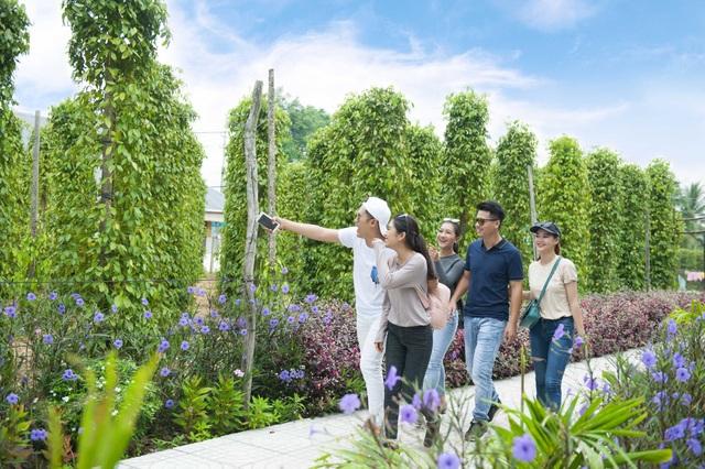 Phú Quốc nổi tiếng bởi những vườn tiêu xanh ngát là địa điểm thu hút du khách trong và ngoài nước.