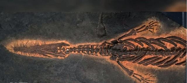 """Phải mất nhiều năm các nhà khoa học mới xác định được chính xác danh tính của """"bạo chúa"""" đại dương Tylosaurus."""