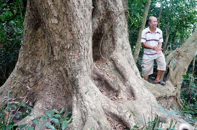 Dù đã nhiều người hỏi mua nhưng ông Ba quyết giữ làm di tích, cây kiểng cho gia đình và quê hương.