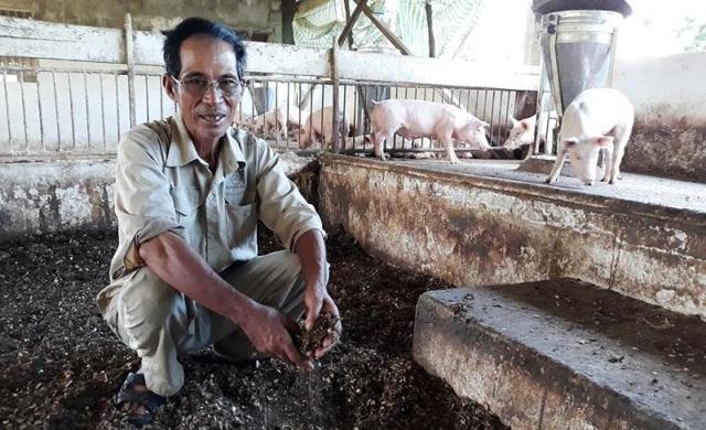 Mô hình trang trại lợn thoáng đãng không gây ô nhiễm môi trường.