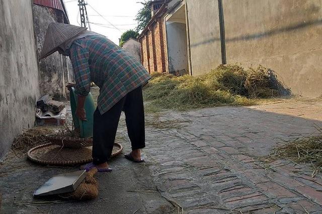 Người dân Đường Lâm đang bắt đầu vào vụ gặt nên mùi lúa chín bao trùm khắp nơi.