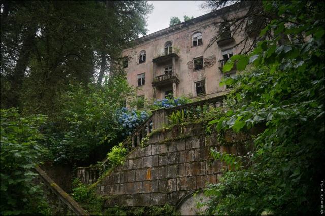 Mọi căn nhà bị cây cỏ phủ kín