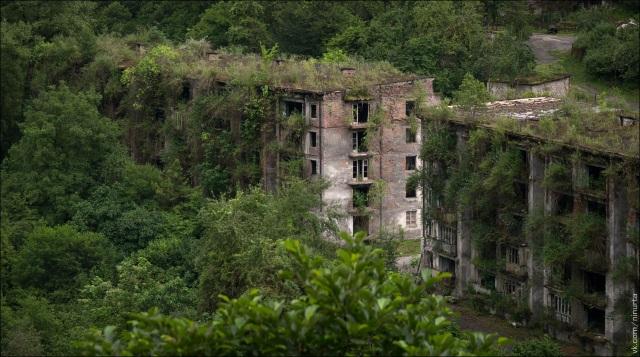 Thảm thực vật xâm chiếm từng khối nhà bỏ hoang