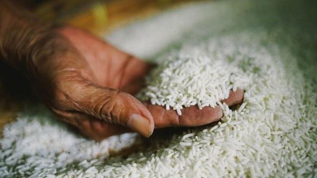 Lúa được bảo tồn an toàn ở ngân hàng gen Philippines - 1