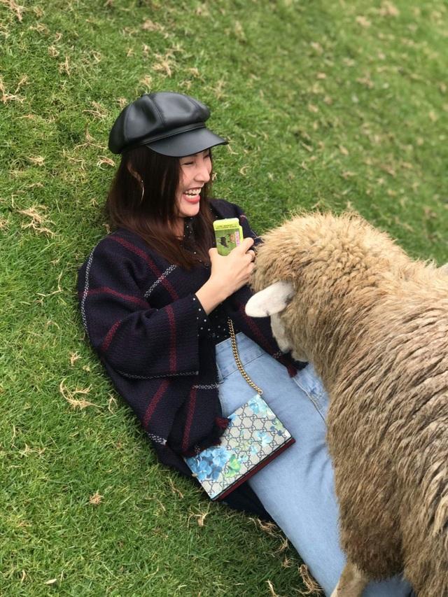 Người đẹp thích thú cho cừu ăn tại nông trường chăn nuôi cừu .