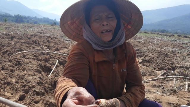 Vào thời điểm này, mỗi ngày có hàng trăm người tham gia săn sùng đất để kiếm thêm thu nhập trong lúc nông nhàn. Sùng đất trên bãi bồi là thực phẩm sạch, bổ dưỡng nên được ví như hải sâm trên cạn. Hiện thương lái đang thu mua loại côn trùng này với giá 200.000 đồng/kg.