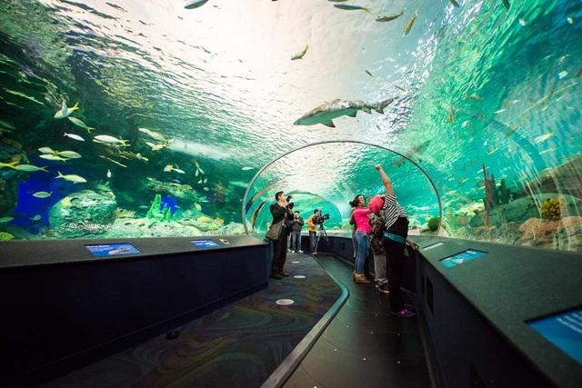 Thủy cung Ripley - một trong những điểm đến thu hút du khách khi tới Toronto, Canada