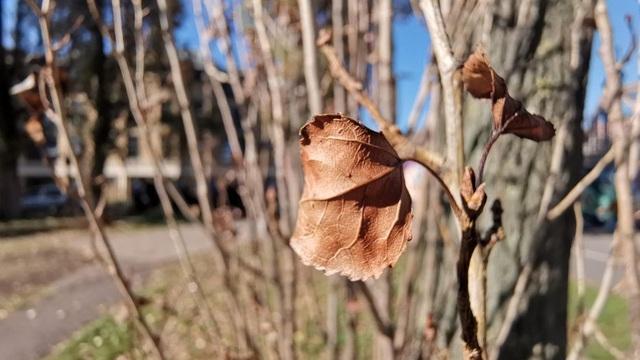 Ảnh macro khi sử dụng máy ảnh góc rộng cho thấy mức độ chi tiết cao, khả năng xóa phông ấn tượng, dù đây là một bối cảnh phức tạp với sự xuất hiện của nhiều nhánh cây.