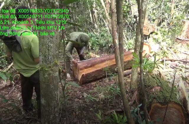 Cơ quan chức năng kiểm đếm số gỗ còn sót lại hiện trường (ảnh Chi cục Kiểm lâm cung cấp)