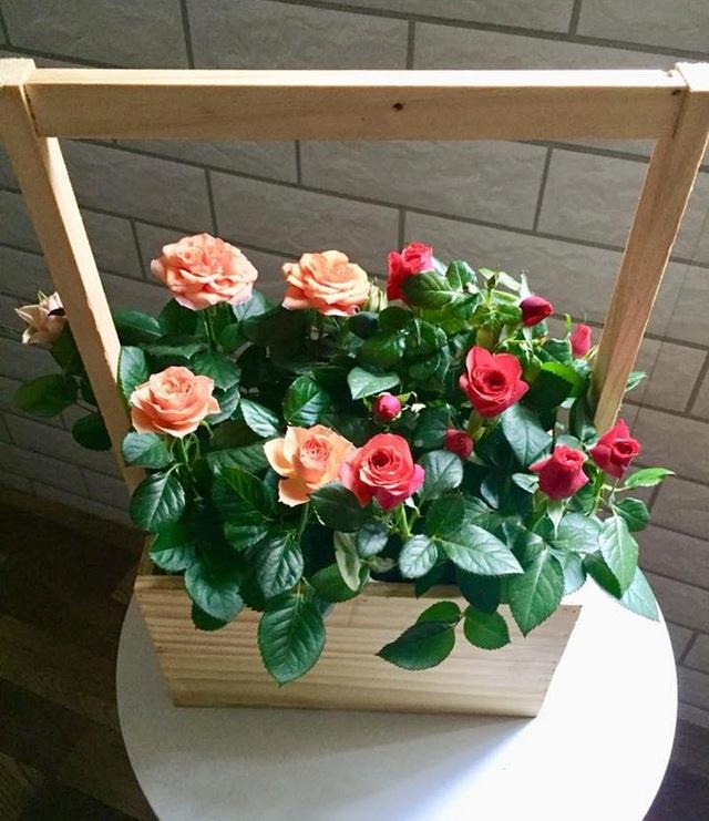 Hoa hồng cảnh giá dưới 300 ngàn đồng/giỏ đang bán đắt như tôm tươi
