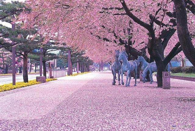 Lễ hội hoa anh đào Nhật Bản tổ chức vào mùa xuân khi các cây hoa đồng loạt nở rộ