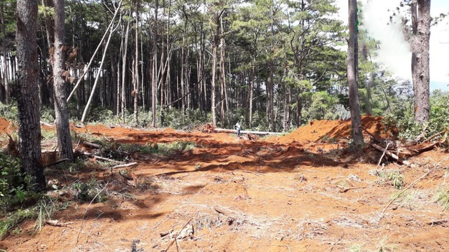 Khoảng 400 m2 đất rừng trồng thông bị san ủi nằm ngay cạnh đồn công an và đối diện trạm kiểm lâm