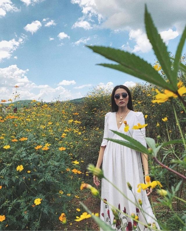 Những bức hình của Tăng Thanh Hà khiến nhiều bạn trẻ thích thú rủ nhau lập kế hoạch lên Đà Lạt vì: mùa dã quỳ đến rồi. Dã quỳ là loài hoa dại, phổ biến ở Tây Nguyên và nhiều tỉnh vùng cao phía Bắc. Tuy nhiên, nói đến mùa dã quỳ người ta thường nhắc đến Đà Lạt.