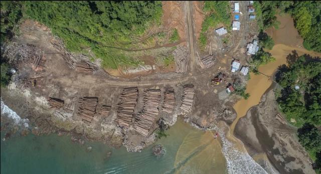 Bãi tập kết gỗ ven bờ đảo Solomon chụp từ trên cao (Ảnh: Reuters)