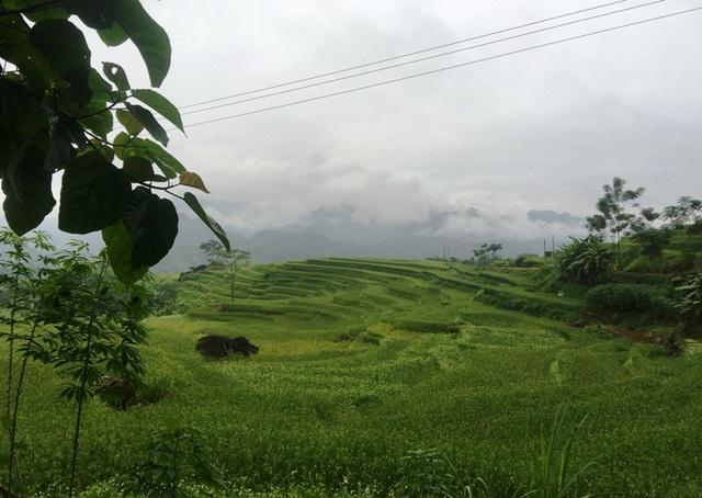 Những ruộng lúa bậc thang xanh ngút ngàn.