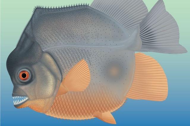 Sinh vật giống cá piranha 150 triệu năm trước dùng răng nanh ăn thịt con mồi - 1