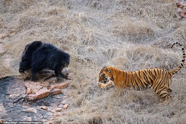 Hai kẻ thù không đội trời chung quyết đấu với nhau.