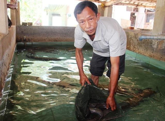 Với mô hình nuôi cá chình và bống tượng, lão nông Võ Tuấn Tú thu về 400 triệu đồng/năm.