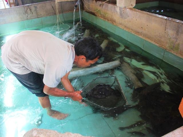 Hồ nuôi bống tượng của lão nông Võ Tuấn Tú.