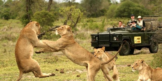 Du khách trong chuyến tham quan vườn quốc gia Kruger, Nam Phi