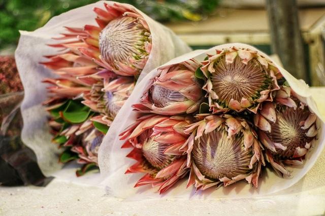 Thảo đường hoàng đế là loại hoa đắt nhất ở chợ Quảng bá, chỉ có 1 đến 2 cửa hàng nhập được loài hoa này về bán và mức độ tiêu thụ rất nhanh. Giá bán lẻ của Thảo đường hoàng đế khoảng 170.000đ/bông.
