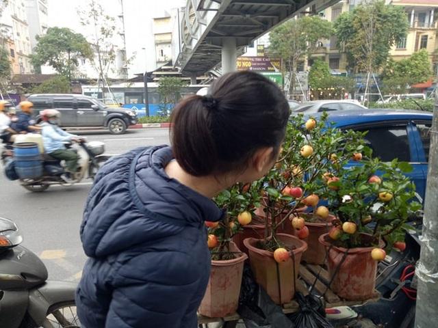 """300 nghìn đồng/ chậu, táo cảnh bonsai """"khuynh đảo"""" thị trường 20/10 - 9"""