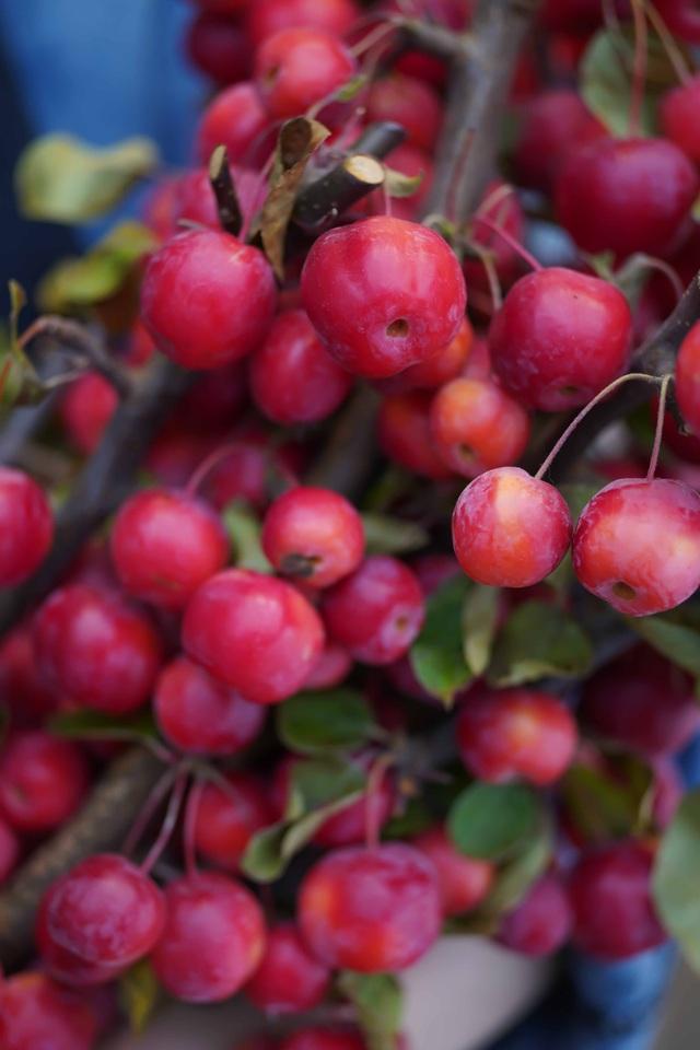 Táo chùm Apple branch Red Sentinel (Box) là loại quà tặng lần đầu tiên có mặt ở Việt Nam. Giá của chúng khoảng 500.000 đồng/cành với hàng trăm quả táo nhỏ.