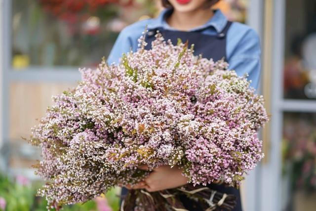Một loài hoa khác cũng có xuất xứ Hà Lan là hoa Erica