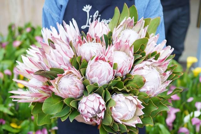 Loài hoa có cái tên rất kêu là Thảo đường hoàng đế. Đây là loại hoa thân gỗ đến từ Nam Phi. Ý nghĩa của loài hoa này được người bán giải thích là tượng trưng cho lòng dũng cảm và sự kiêu hãnh