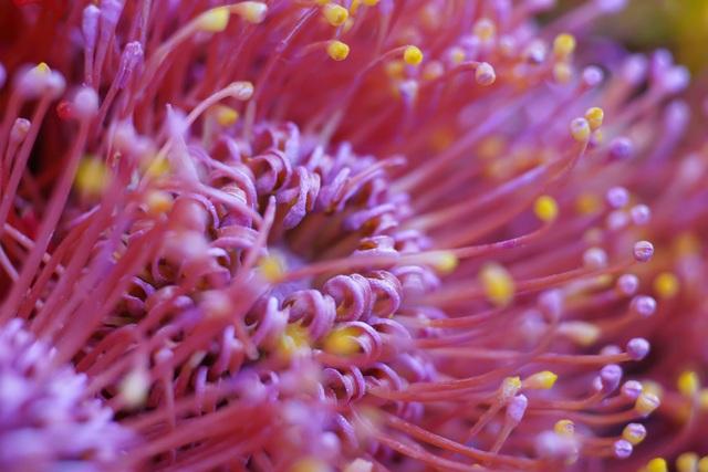Cái tên Việt hoá của Leucos.(C) Aubergine là hoa ánh trăng