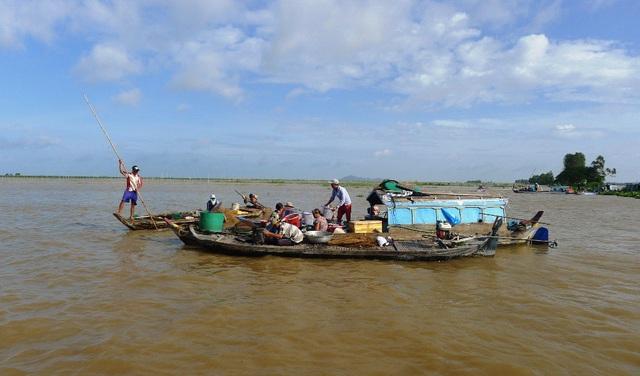 Một góc chợ nổi - nơi chuyên thu mua cá đồng của người dân được hình thành trên cánh đồng mênh mông nước ở xã Phú Hội, huyện An Phú