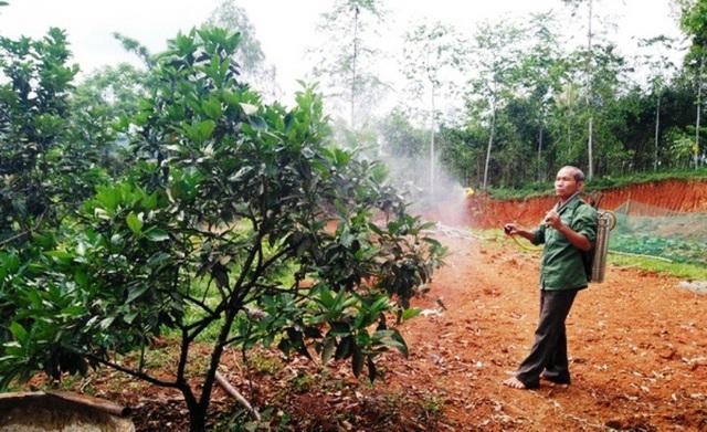 Một người dân không cần sử dụng bảo hộ khi phun thuốc trừ sâu không độc hại.