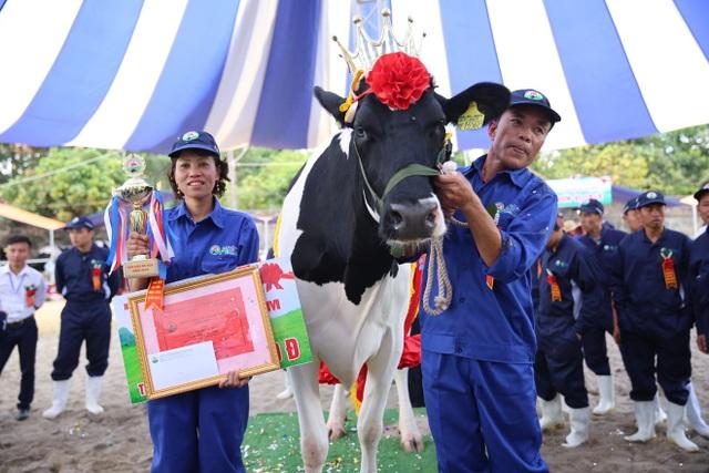 Nàng hậu mang số hiệu 13568 tại đơn vị 19.5 của chủ hộ Lê Xuân Tiến đã lên ngôi hoa hậu bò sữa 2018 với tổng giải thưởng trị giá 75 triệu đồng.