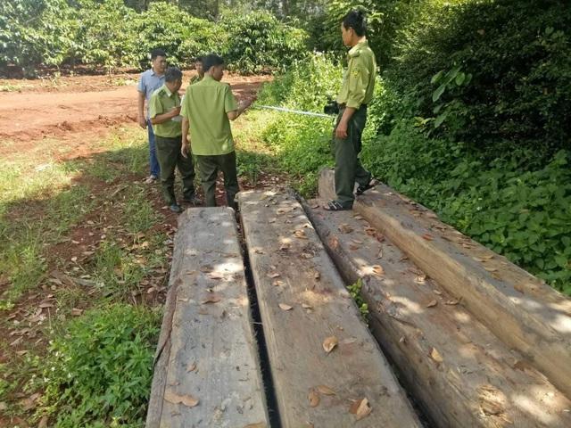 Cơ quan chức năng tiến hành kiểm đếm số gỗ không rõ nguồn gốc