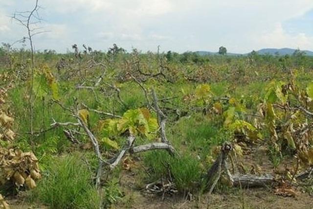 Hiện trường một khu vực vụ hủy hoại rừng tại Ea Súp (ảnh VKSND)